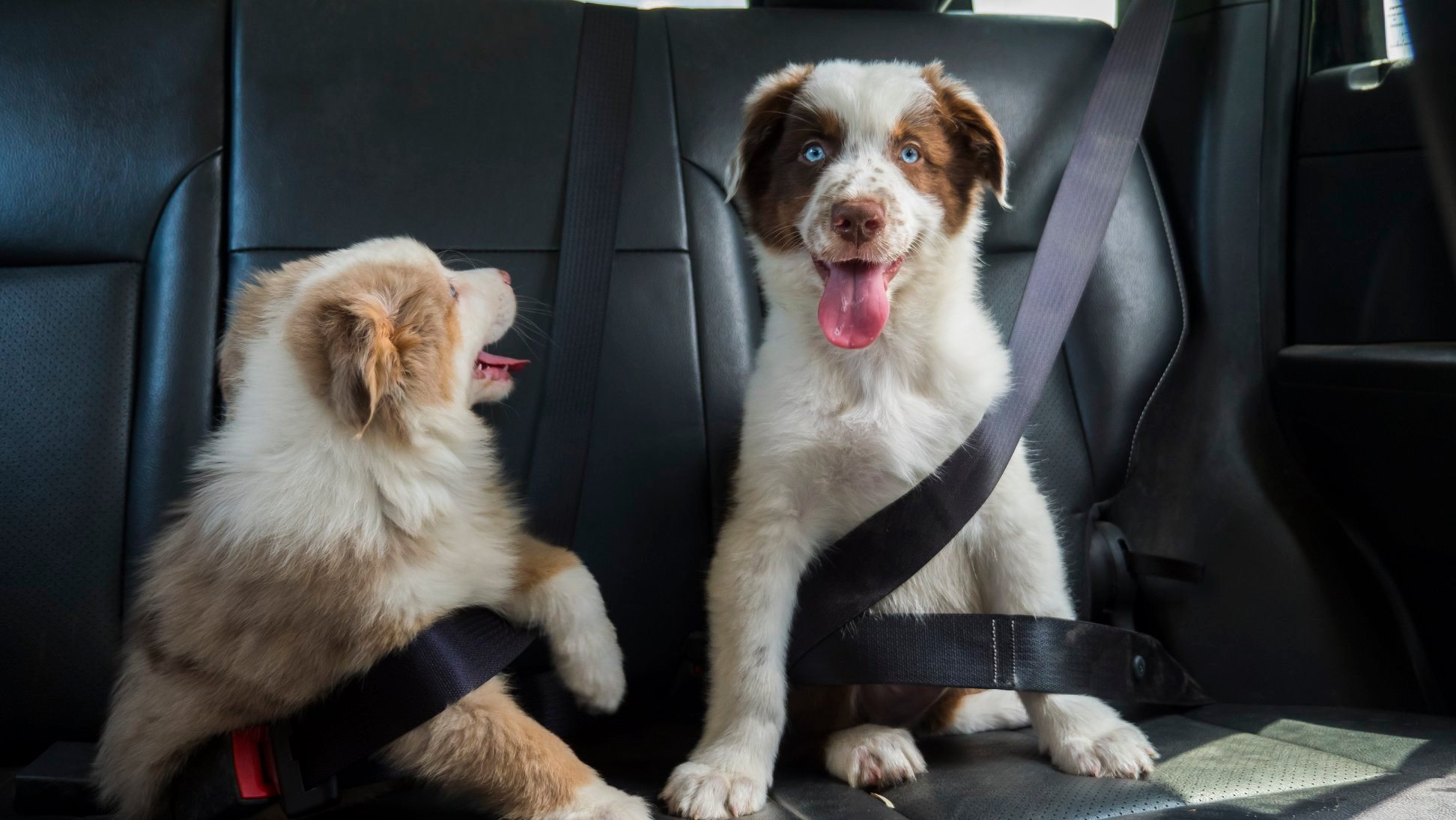 """Tips for Keeping Your Vehicle """"Doggone"""" Clean   Header"""